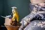 Постельное белье сатин люкс Issimo Home Protea семейное 0